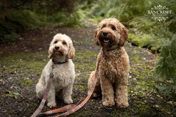 Sam & Heather - Abbeywood Wedding  01053